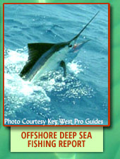 Offshore Deep Sea Fishing Report