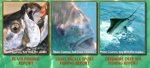 Click here to visit Key West Pro Guides